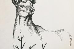 draw-deer-dot